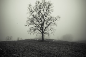 Cropped tree