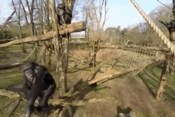 ape v drone