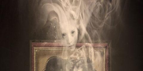 Shadows in Summerland, Adrian Van Young, Chizine
